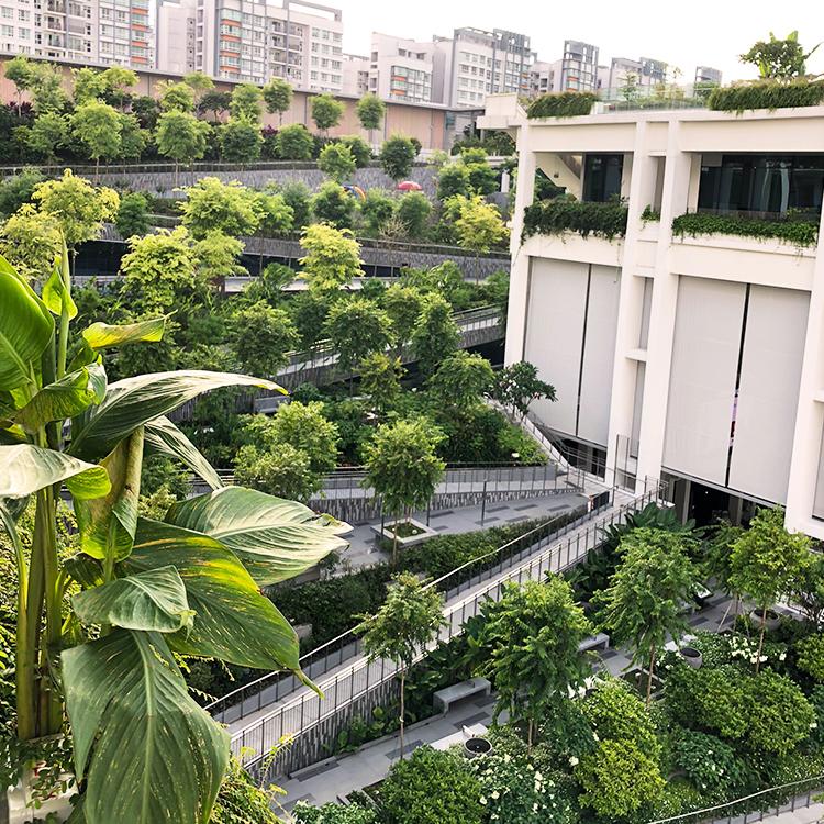 Oasis Terraces, Singapore